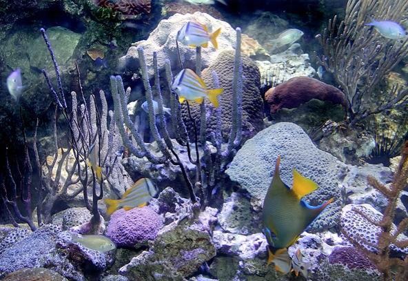 Bientôt un aquarium en Guyane ?