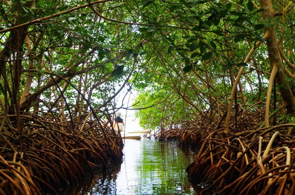 Mangrove Antilles