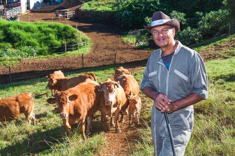 Sica Révia : pour plus de bœuf pays dans nos assiettes