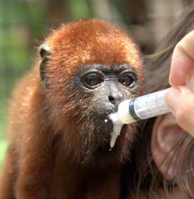 """""""SOS Faune Sauvage"""" : un centre de soin au secours des animaux sauvages"""