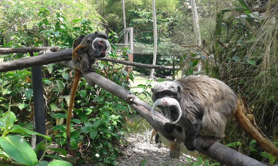 Ça gazouille au Zoo de Martinique !