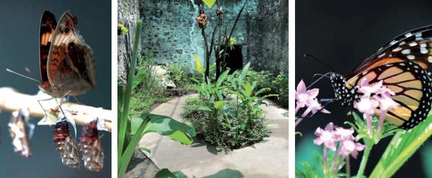 Dossier séduction des Outre-mer: zoo de Martinique, serre aux papillons