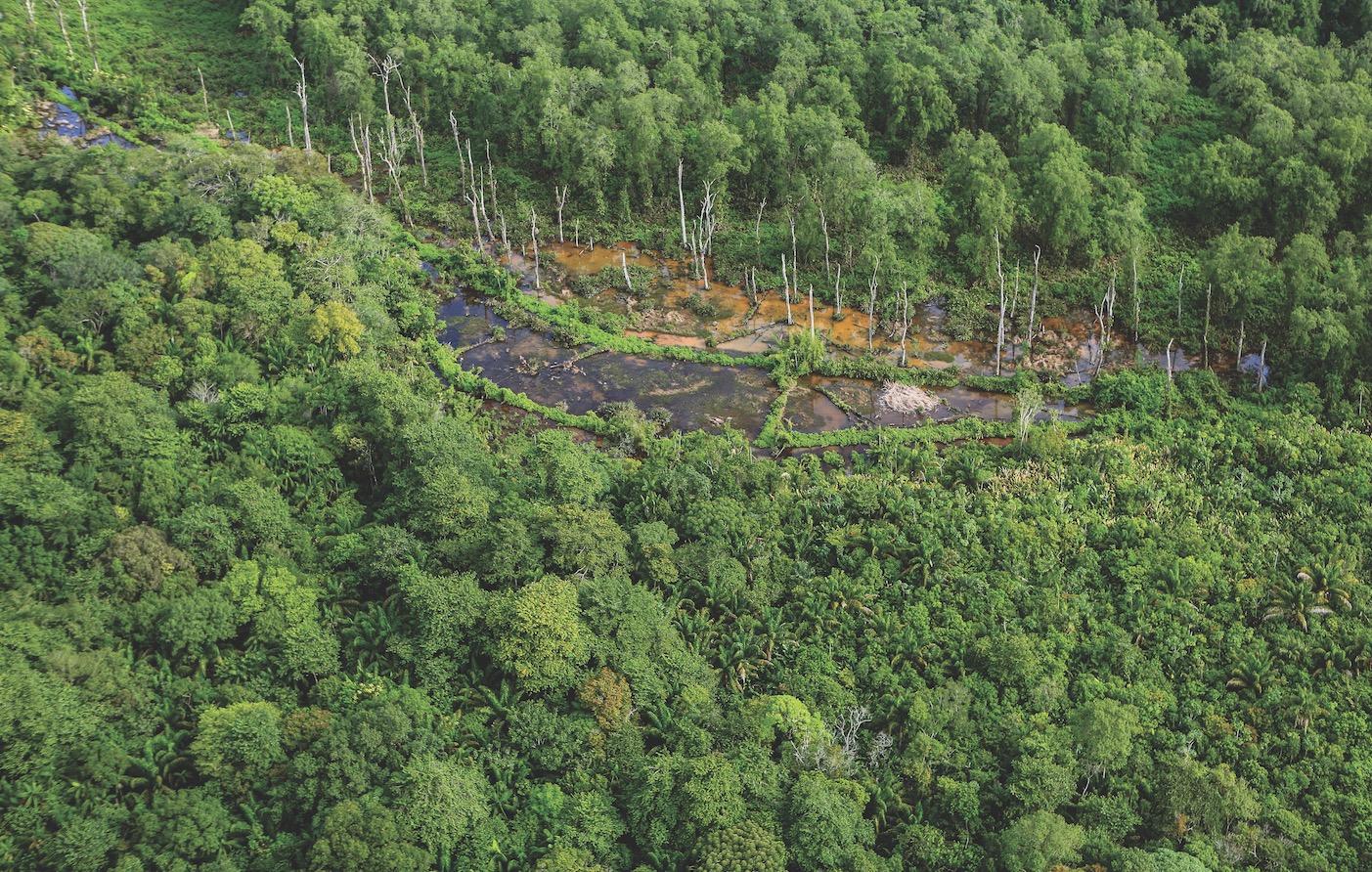L'image du mois : la forêt amazonienne