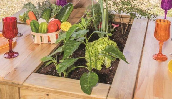 Potager bio installé par l'entreprise Mister Green en Martinique