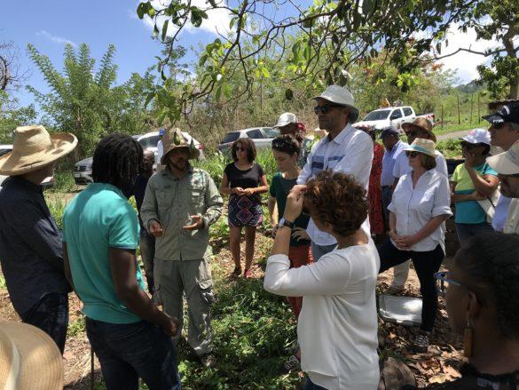 Visite du jardin des Cols Verts en Martinique par les adhérents de Contact Entreprises