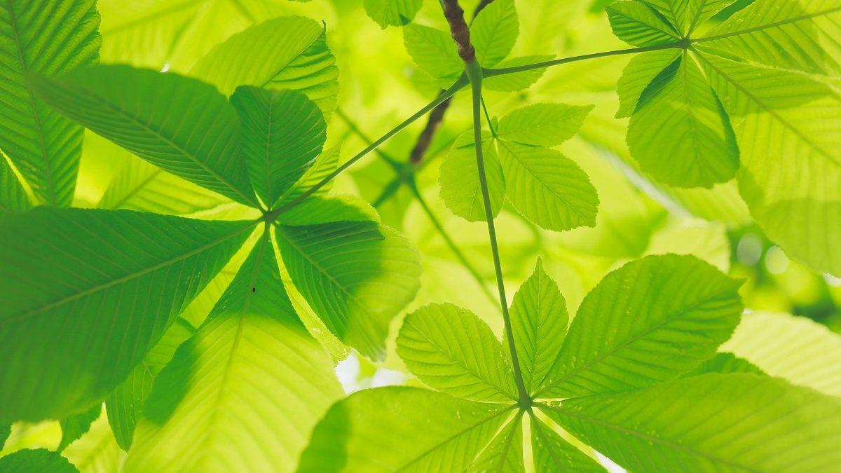 La CMAR accompagne les artisans du BTP face aux défis écologiques
