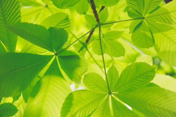 Plantes - illustration de l'écologie