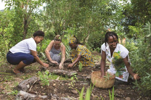 Récolte dans le jardin de l'association Bwa Lansan