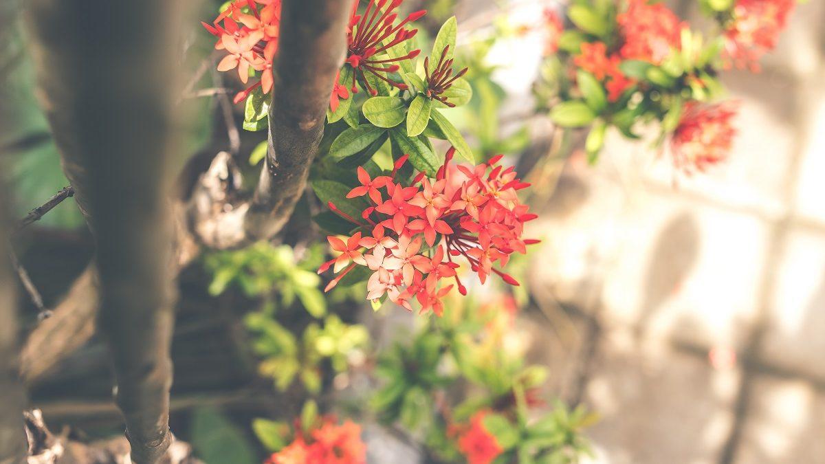 Rendez-vous aux jardins en Guadeloupe : aperçu de ce qui vous attend
