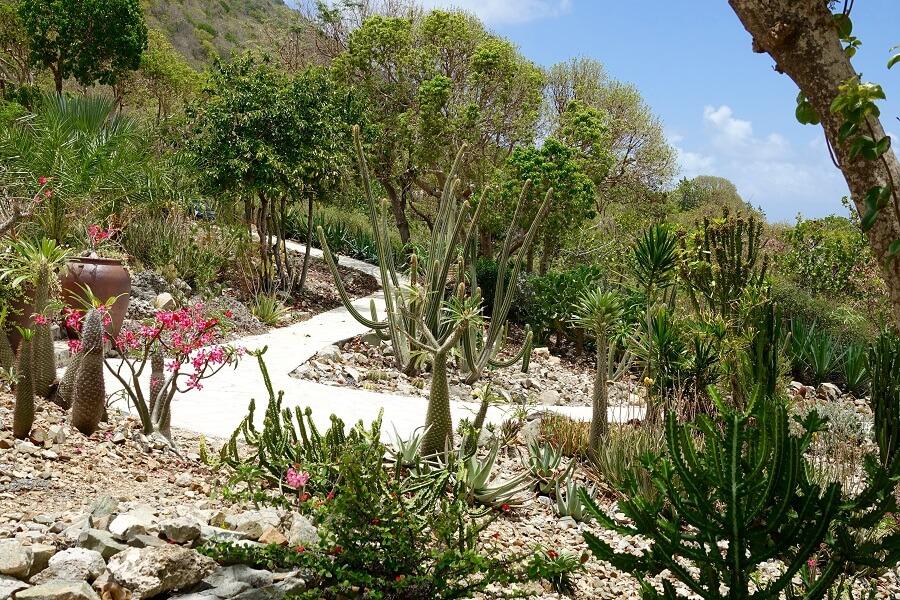 Jardin du Désert - La Désirade - Guadeloupe