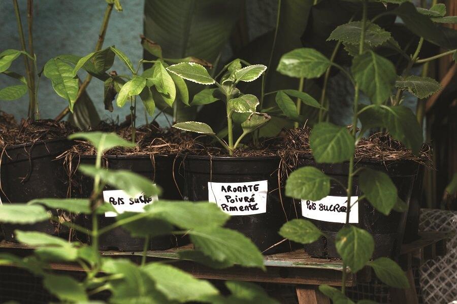 Plantations - Jardins du Bonheur - Remire-Montjoly