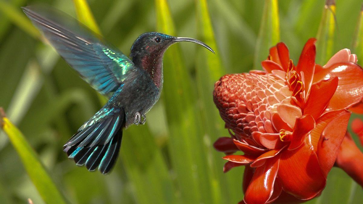 UDE-MEDEF : Faire de la Guadeloupe le plus grand jardin créole