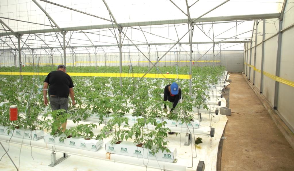 Agriculteurs accompagnés par Ecofip Réunion