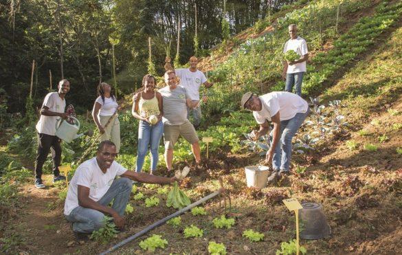 Agriculteurs de la route des fermes bio - Martinique