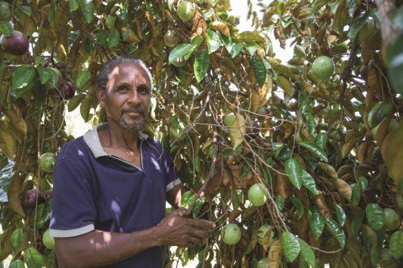Jean-Hugues Glombard - Agriculture raisonnée - Martinique