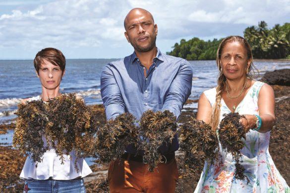 Groupe de travail sargasses - UDE-MEDEF Guadeloupe
