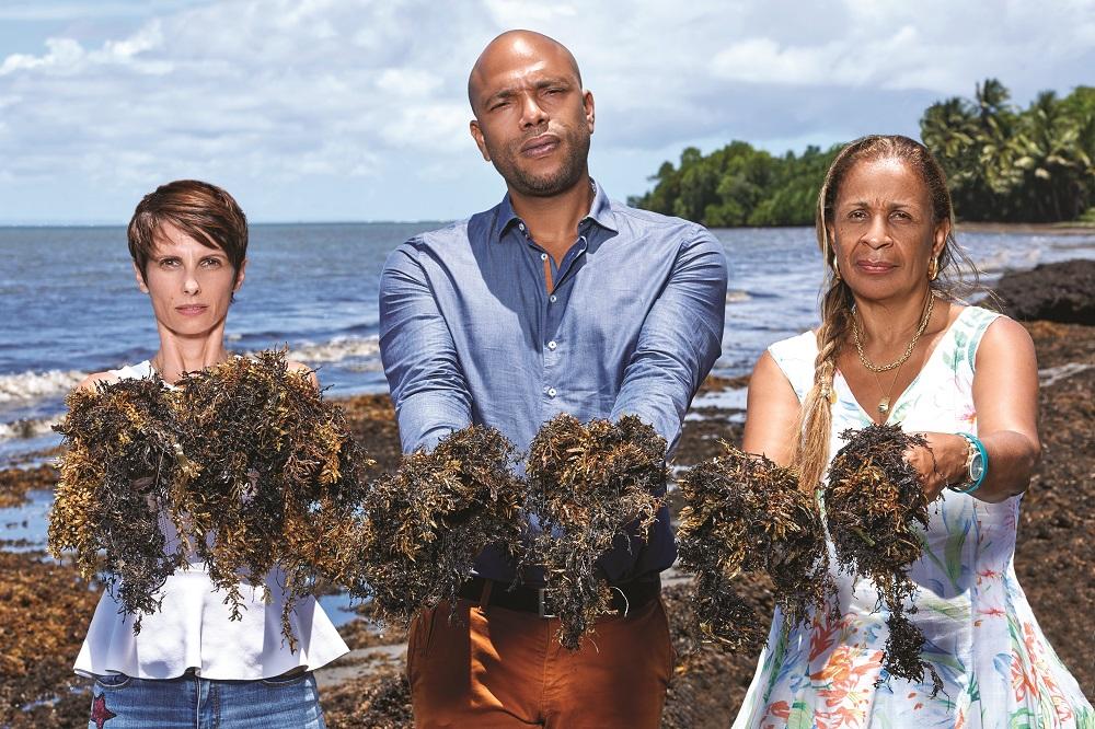 Sargasses : Appel aux entrepreneurs guadeloupéens