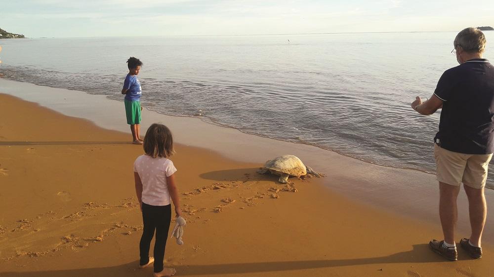 Pourquoi les populations de tortues diminuent en Guyane ?