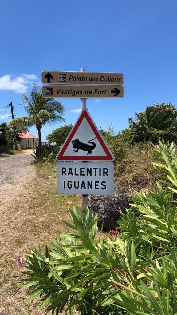 Panneau iguanes - La Désirade