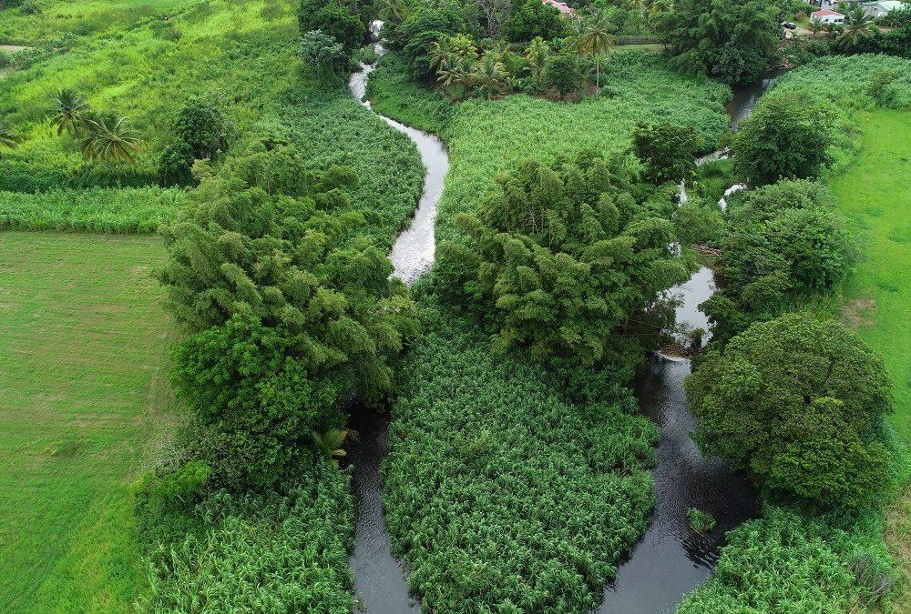 Projet Protéger : le génie végétal au service d'une nature préservée