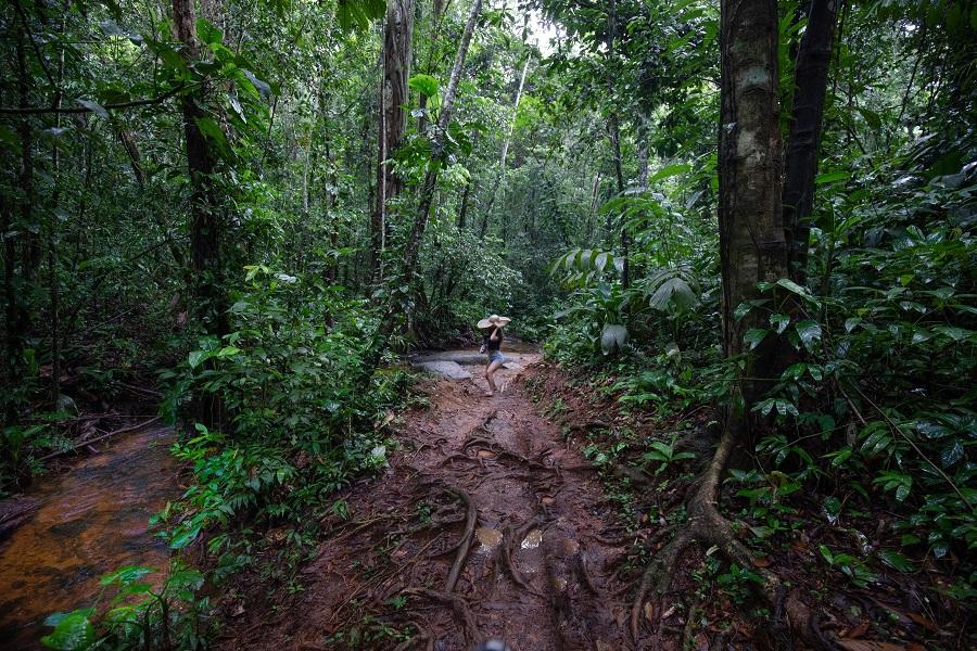 Sentier du Rorota - Guyane