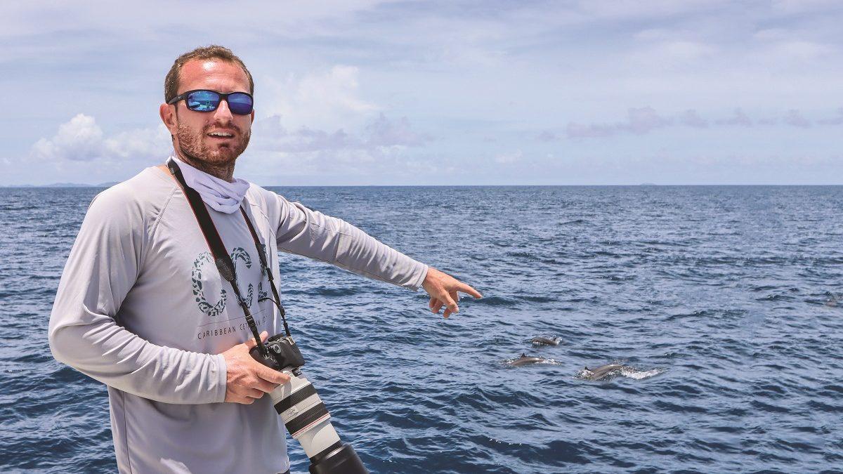 Coup de cœur : Caribbean Cetacean Society et la protection des cétacés